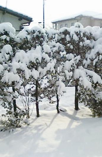 写真2sakuma.jpg