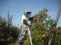 apple&aoyama.JPG