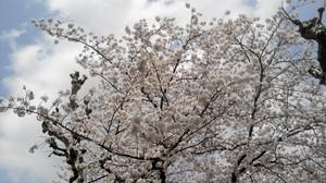 furuya_blog0404.JPG