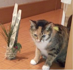 猫◆はい、ポーズ.jpg
