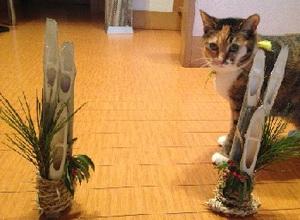 Photo2◆カドマツと猫.jpg