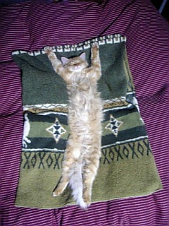 banzai-cat.jpg