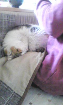 okamoto_cat.jpg